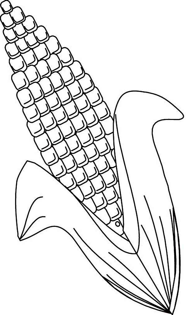 Ear of Corn Coloring Page Ear of Corn Coloring Page Coloring Sun