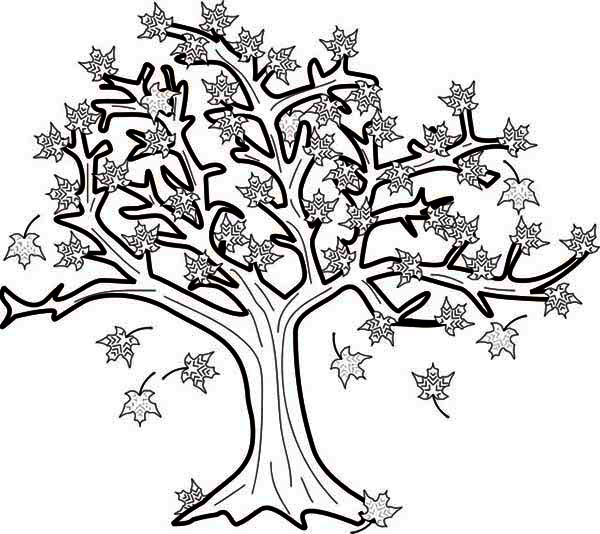 Maple Tree in Autumn Season Coloring Page: Maple Tree in Autumn ...