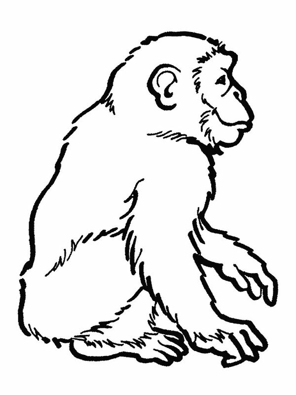 Awesome drawing of a chimpanzee coloring page