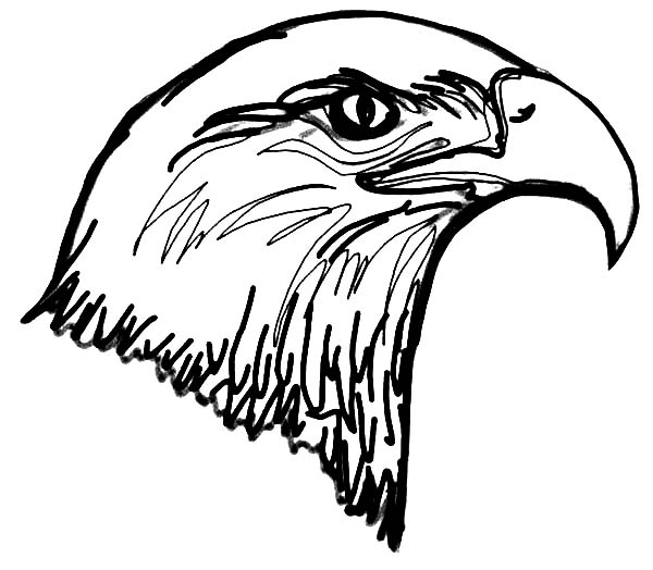 Bald Eagle Head Coloring Page | Coloring Sun