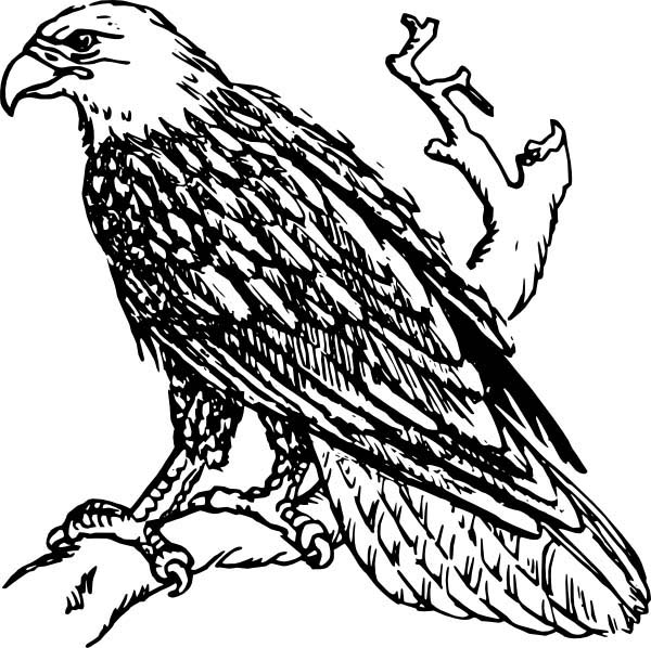 Eagle, : Bald Eagle Monitoring His Area Coloring Page