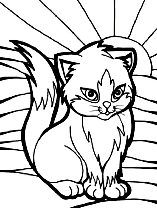 Cat, : Beautiful Picture of Cat Coloring Page