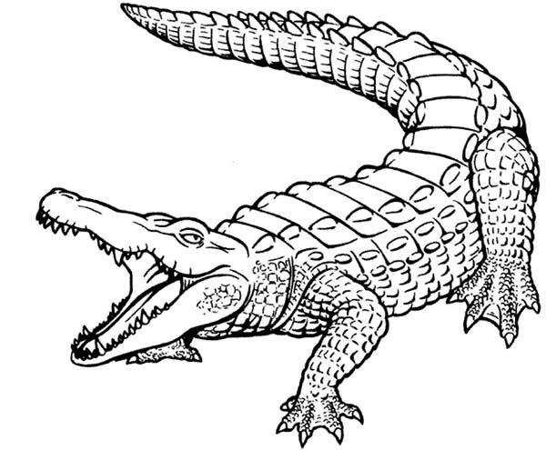 Crocodile, : Beautiful Skin of Crocodile Coloring Page