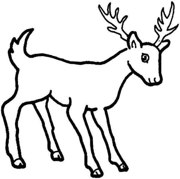 Deer, : Beautiful Young Deer Coloring Page