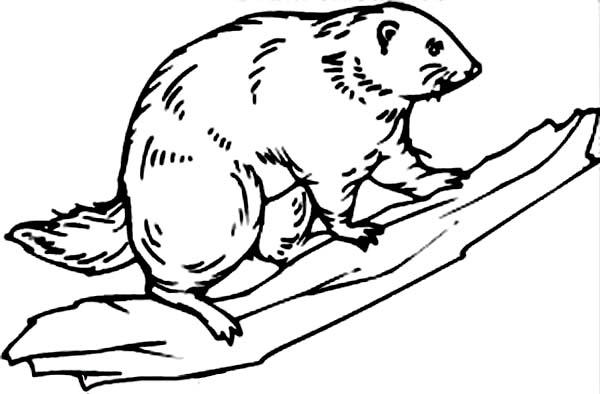 Beaver, : Beaver Climb a Tree Coloring Page