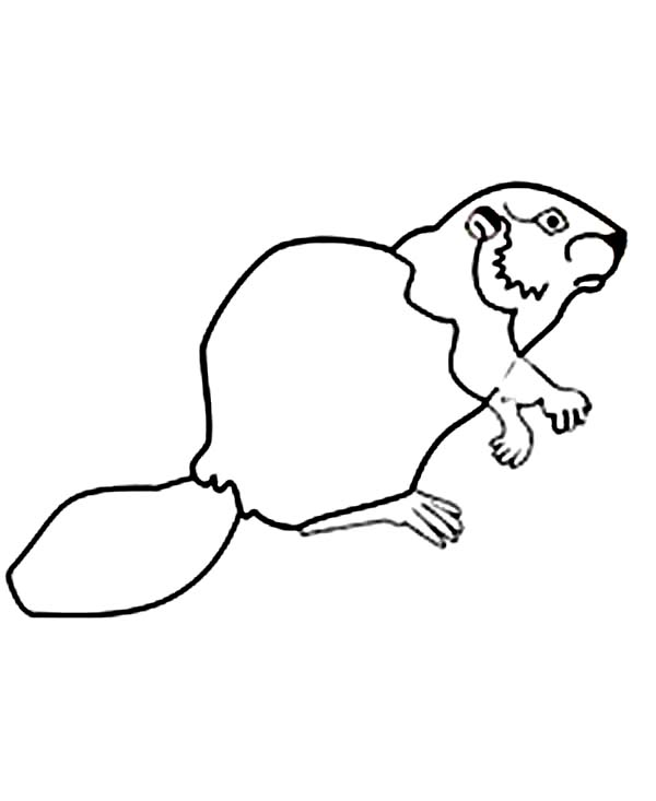 Beaver, : Beaver Outline Coloring Page
