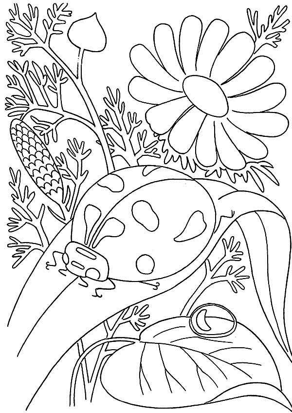 Bugs, : Bugs Coloring Page for Kids