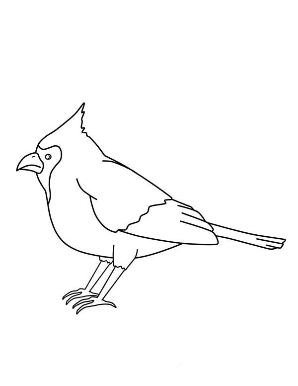 Cardinal Bird, : Cardinal Bird Beautiful Voice Coloring Page
