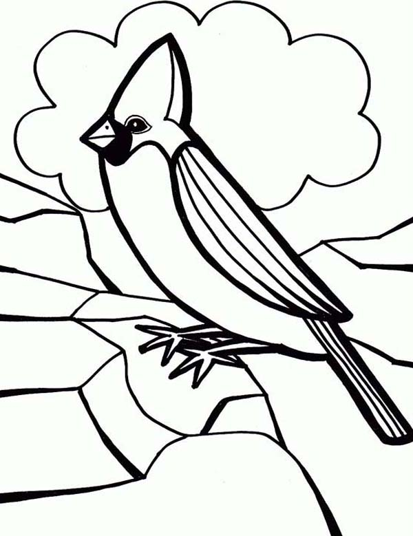 Cardinal Bird, : Cardinal Bird Coloring Page for Preschool Kids