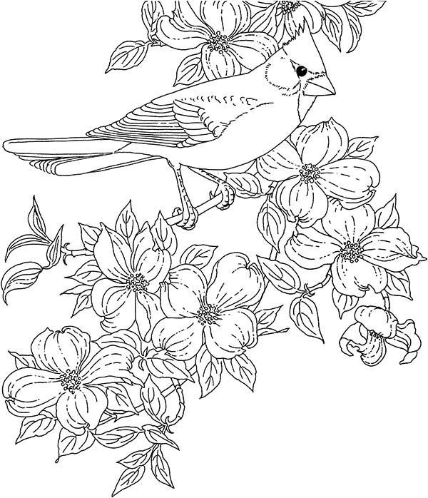 Cardinal Bird, : Cardinal Bird and Blossom Flower Coloring Page