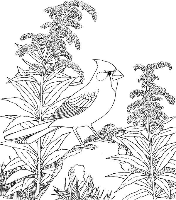 Cardinal Bird, : Cardinal Bird in the Wood Coloring Page