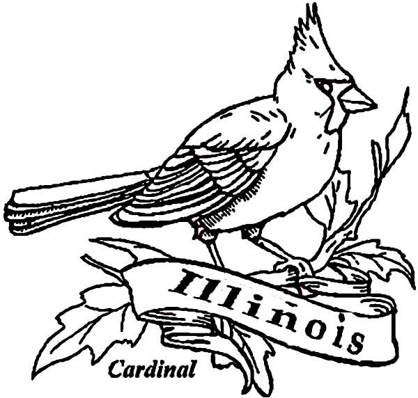 Cardinal Bird, : Cardinal Bird of Illinois Coloring Page