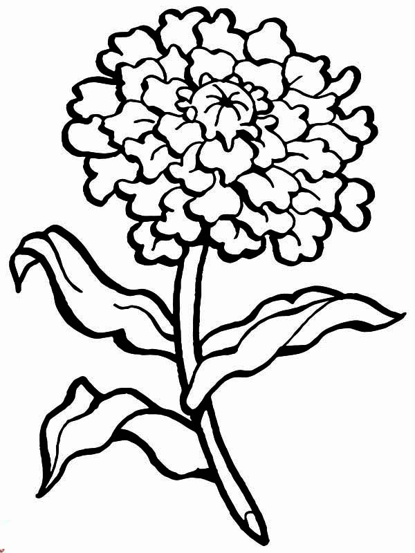 Carnation Flower, : Carnation Flower for Mothers Day Coloring Page