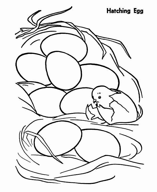 Chicken, : Chicken Just Hatching from Egg Coloring Page