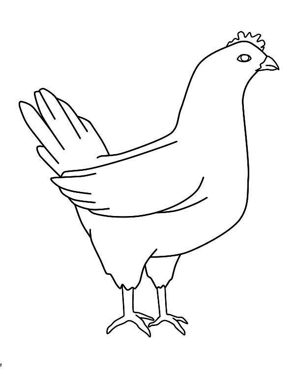 Chicken, : Chicken Mother Coloring Page