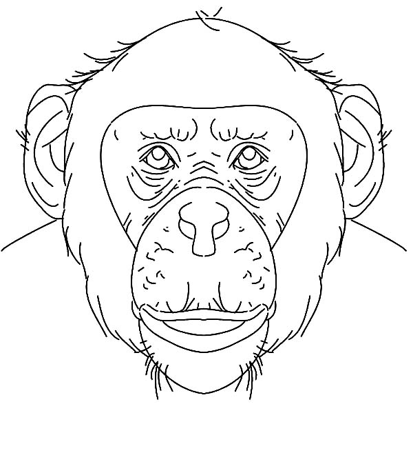Elegant Chimpanzee Face Coloring Page With Pages
