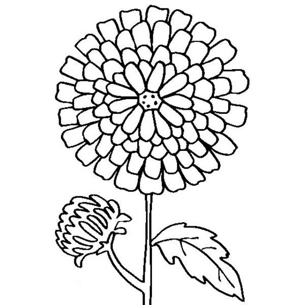 Marigold Flower Drawing Easy Sketch Coloring Page View
