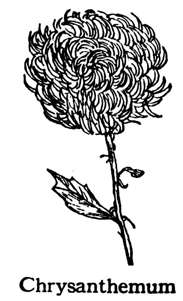 Chrysanthemum fro Flower Bouquet Coloring Page | Coloring Sun