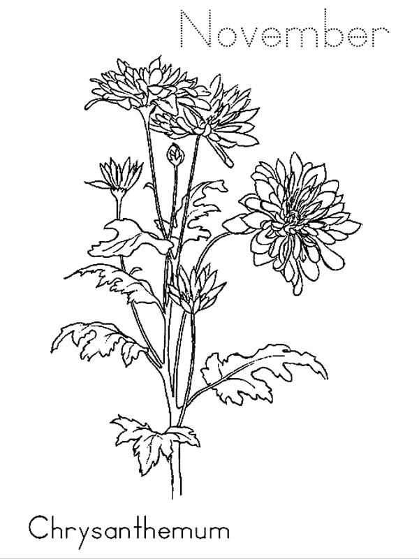 chrysanthemum on november coloring page - November Coloring Pages Free