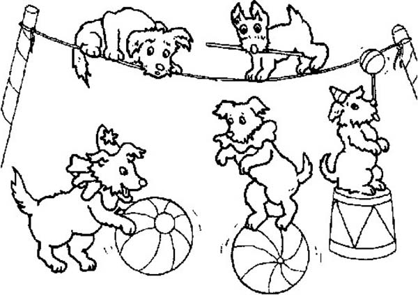 Circus, : Circus Animal in Action Coloring Page