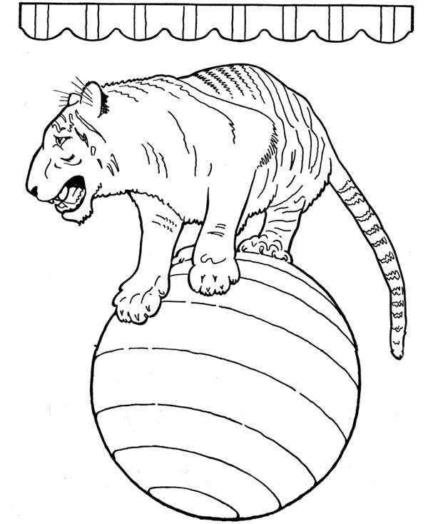 Circus, : Circus Tiger Standing Balance on a Ball Coloring Page
