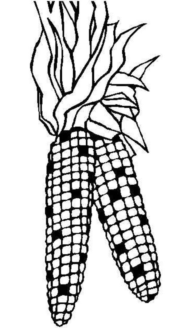 Corn, : Corn Coloring Page