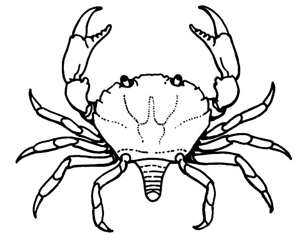 Crab, : Crab Breeding for Consumption Coloring Page
