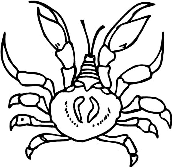 Crab, : Crab Coloring Page for Kids