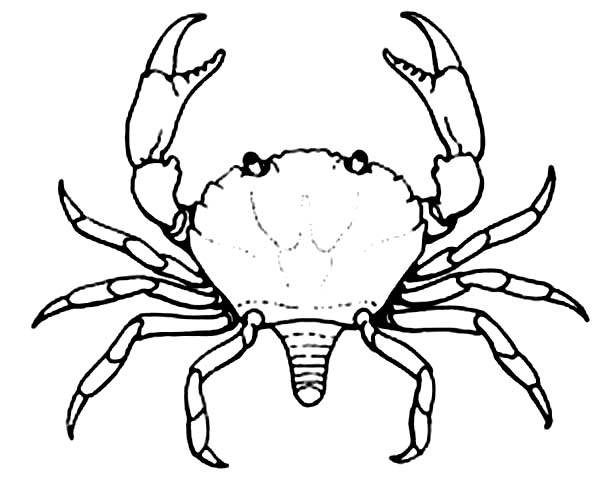 Crab, : Crab Walk Sideways Coloring Page