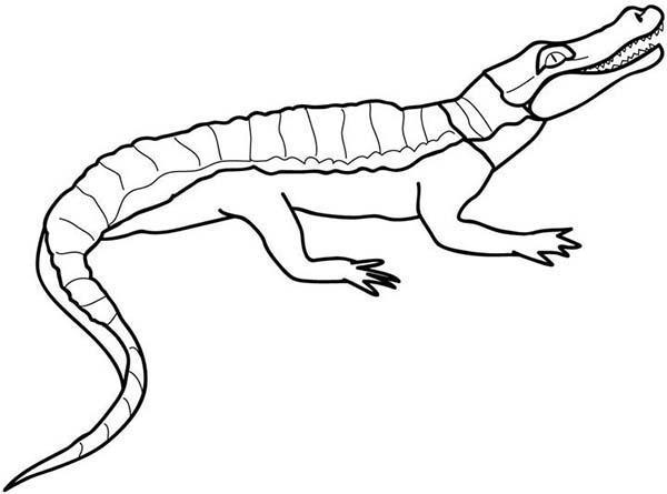 Crocodile, : Crocodile Sunbathing Coloring Page