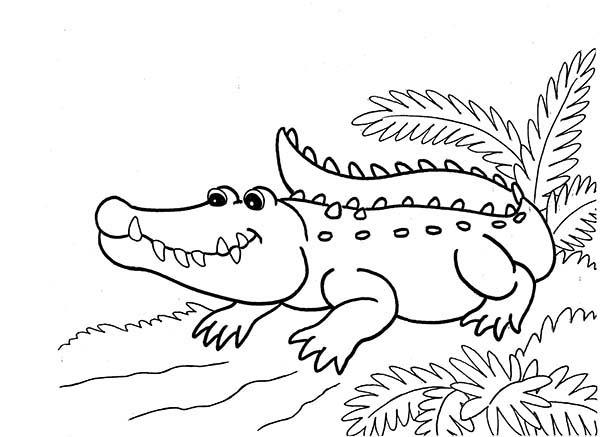 Crocodile, : Crocodile Waiting on Riverside Coloring Page