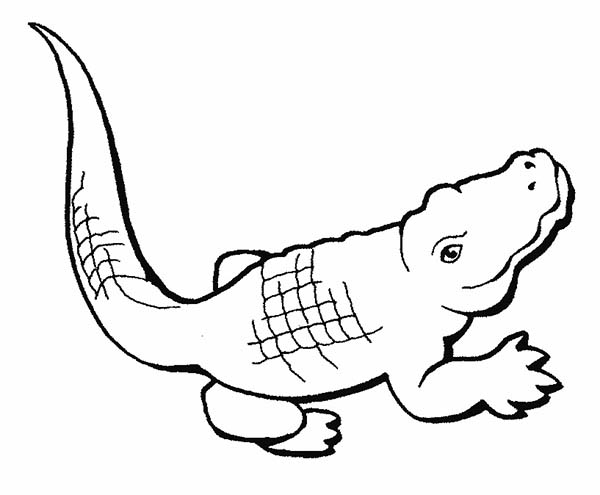 Crocodile, : Crocodile is Protected Animal Coloring Page