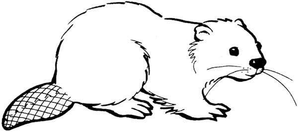 Beaver, : Cute Beaver Coloring Page