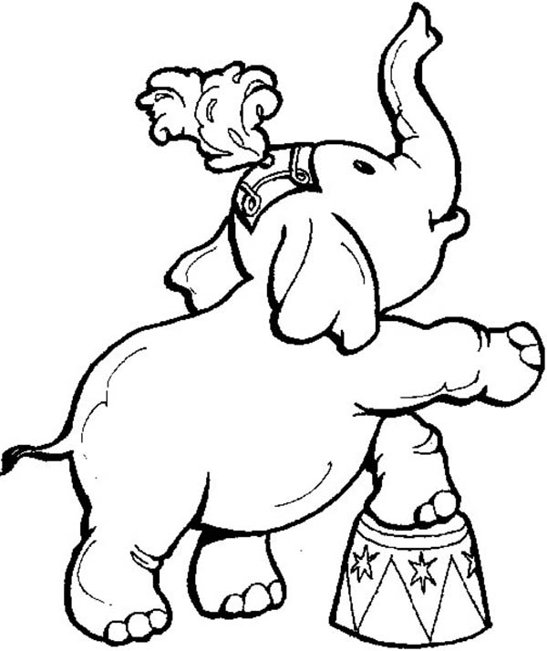 Circus, : Cute Little Elephant Circus Coloring Page