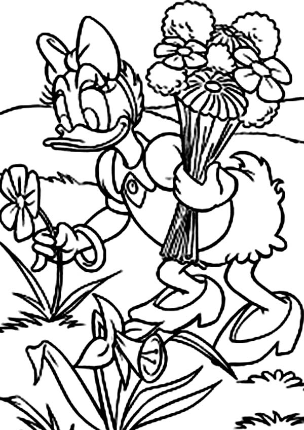 Daisy Duck, : Daisy Duck Pick Flowers at Garden Coloring Page