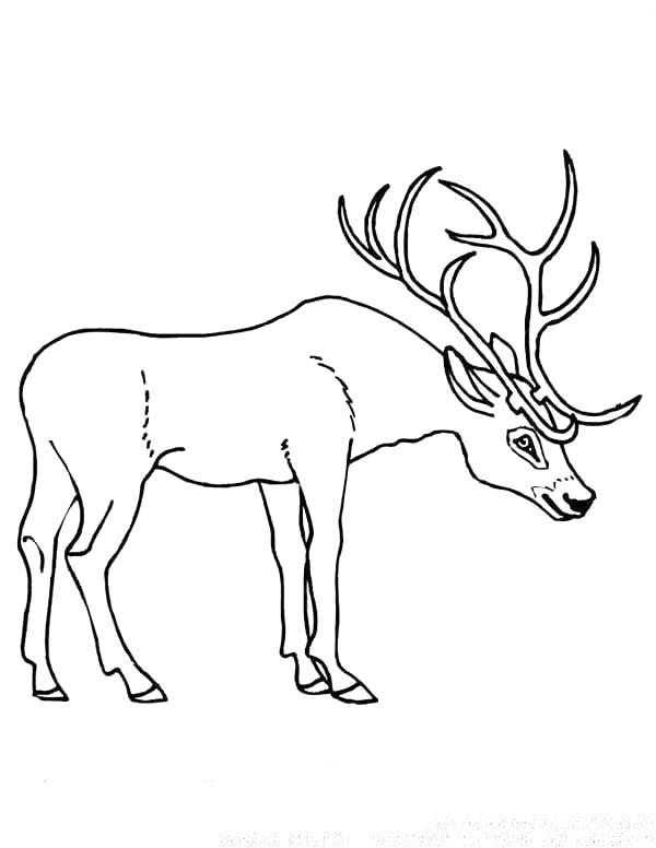 Deer, : Deer Antler Coloring Page