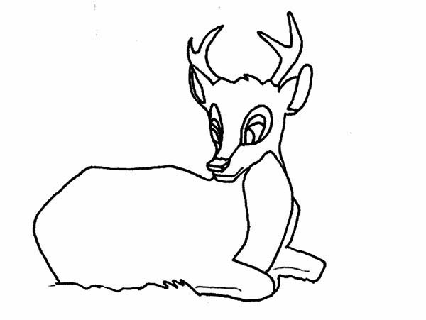 Deer, : Deer Sitting Coloring Page