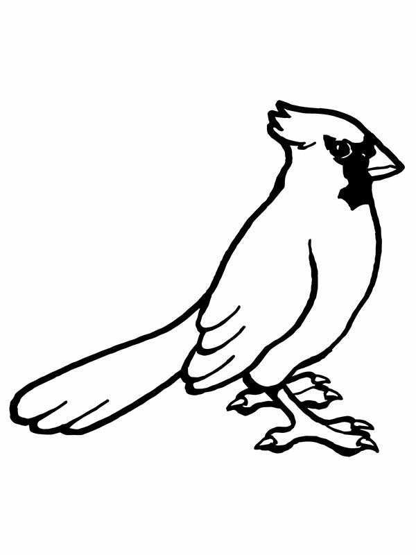 Drawing Cardinal Bird Coloring Page