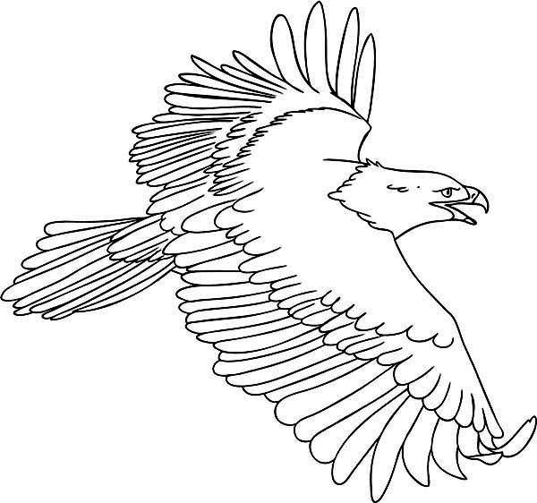 Eagle, : Drawing Flying Eagle Coloring Page