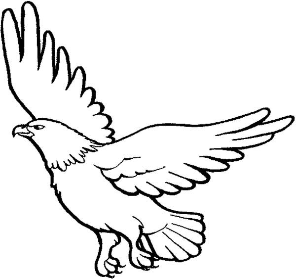 Eagle, : Eagle Begin to Fly Coloring Page