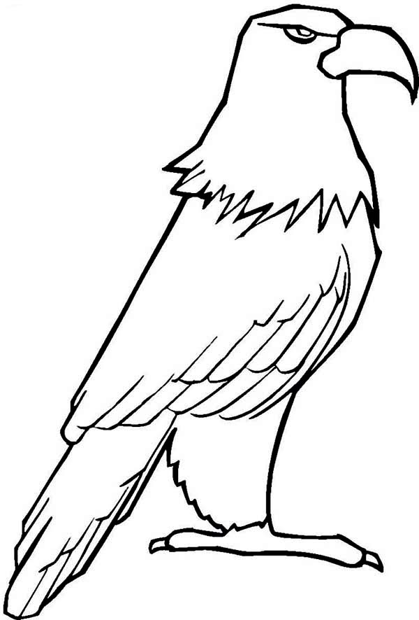 Eagle, : Eagle Coloring Page for Kids