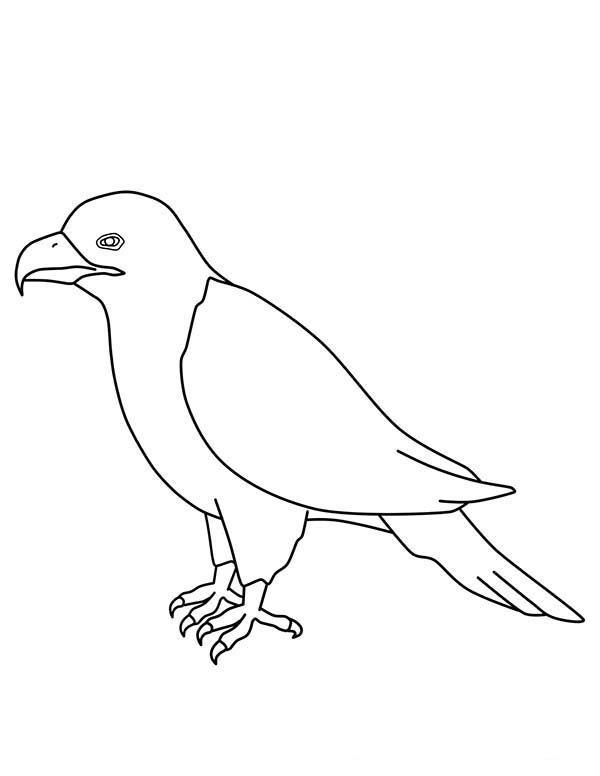 Eagle, : Eagle Outline Coloring Page