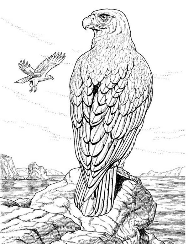 Eagle, : Eagle Standing on the Edge of Cliff Coloring Page
