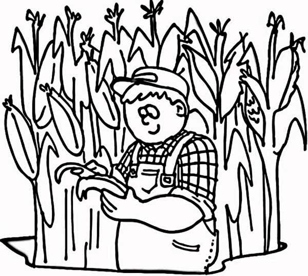 Farmer at His Corn Field Coloring Page | Coloring Sun