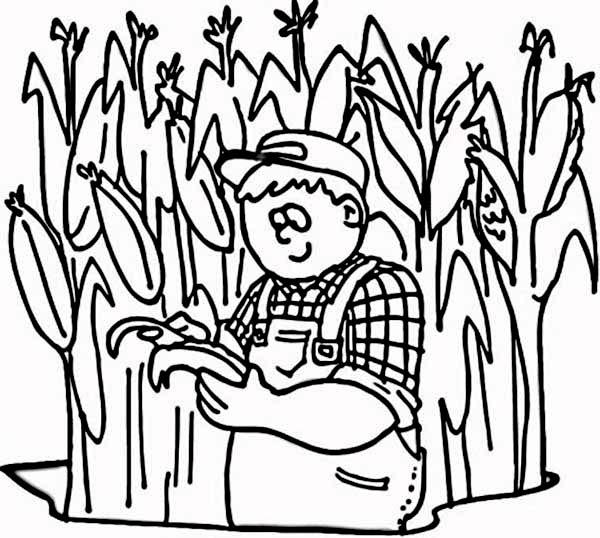 Corn, : Farmer at His Corn Field Coloring Page