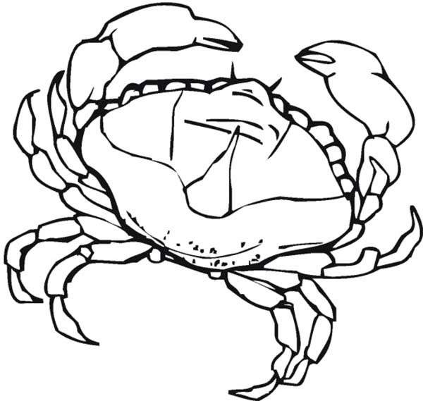 Crab, : Female Crab Coloring Page