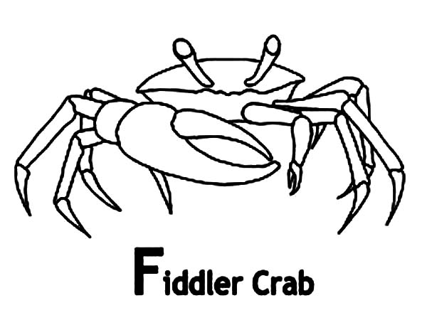 Crab, : Fiddler Crab Coloring Page