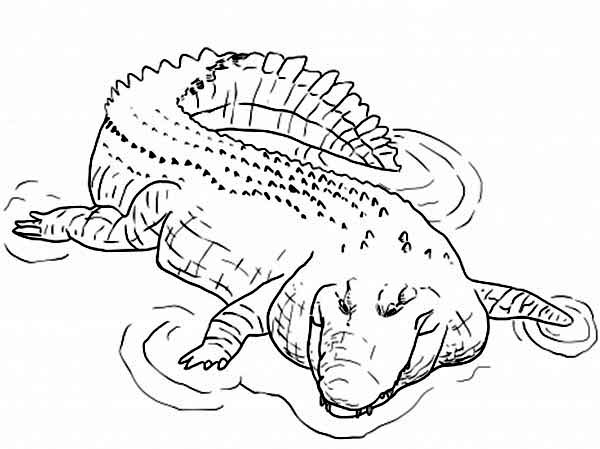 crocodile coloring pages - alligator free coloring pages