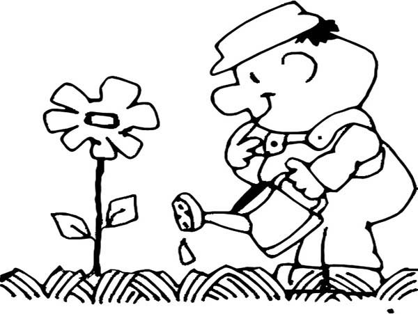 Watering Can, : Gardener Watering the Flower with Watering Can Coloring Page