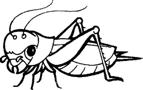Bugs, : Grasshopper Bugs Insect Coloring Page